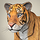 Realistic Bengal Tiger - 3DOcean Item for Sale