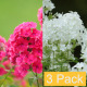 Multicolor Flowers (3-Pack) - VideoHive Item for Sale