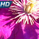 Bright Tropical Flowers - VideoHive Item for Sale