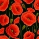 Poppy Pattern - GraphicRiver Item for Sale