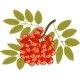 Rowanberry - GraphicRiver Item for Sale
