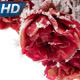 Roses in Hoarfrost - VideoHive Item for Sale