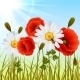 Poppy Grass Seamless Wallpaper - GraphicRiver Item for Sale