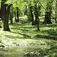 Small Park River Meanders - VideoHive Item for Sale