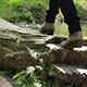 Walking on Tree Bridge - VideoHive Item for Sale