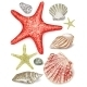 Set of Seashells - GraphicRiver Item for Sale