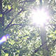 Dazzling Sunshine Through Canopy - VideoHive Item for Sale