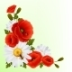 Poppy Daisy Background - GraphicRiver Item for Sale
