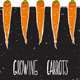 Growing Carrots Freehand Drawing and Lettering - GraphicRiver Item for Sale