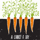 Growing Carrots Scratchy Drawing and Lettering - GraphicRiver Item for Sale