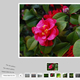 AS3 XML Simplicity Gallery With Category Support - ActiveDen Item for Sale