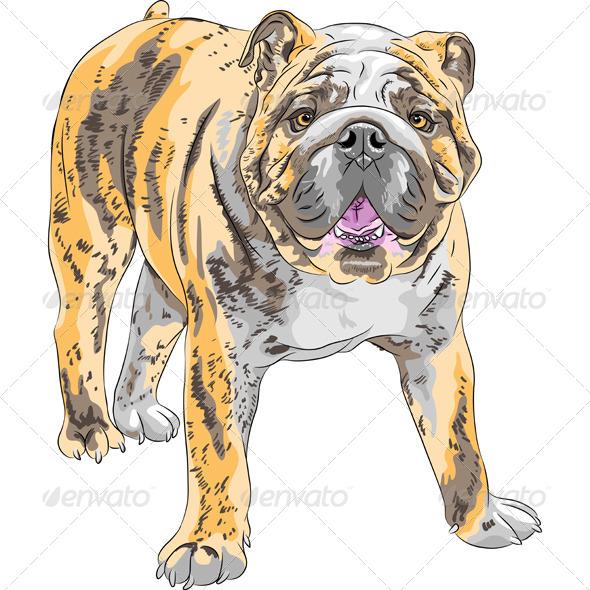 GraphicRiver English Bulldog Breed 7819561