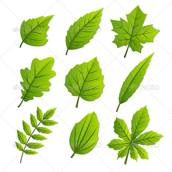 GraphicRiver Spring Leaves 7829373