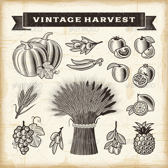 GraphicRiver Vintage Harvest Set 7814553